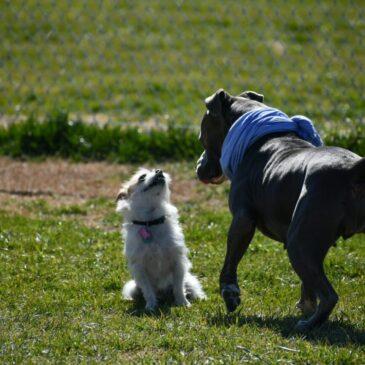 Czy zabierać psa na psie wybiegi?