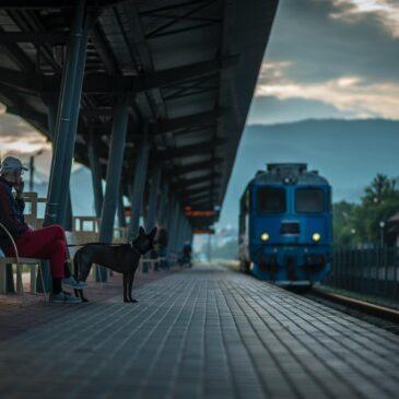 Podróże z psem koleją