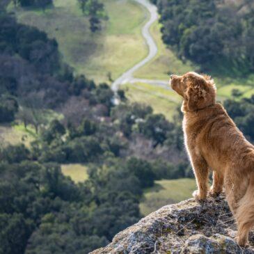 Jak powstrzymać ucieczki psa