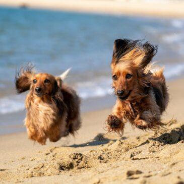 Gdzie na plażę z psem na mierzei wiślanej?